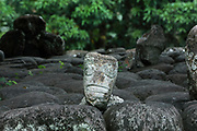 Tiki head, carved from a small stone, one of many placed on stones and logs about the site, made from rock from Toea peak, pebbles from the beach and blocks of volcanic tuff, at the Iipona archaeological site, near the village of Puamau, on the island of Hiva Oa, in the Marquesas Islands, French Polynesia. Tiki sculptures are usually carved in wood or stone and represent Ti'i, a half-human half-god ancestor who is believed to be the first man. Tiki often have a huge head, symbolising power, and big eyes symbolising knowledge. Tiki are respected and are often placed outside houses as protective statues. The Iipona site was a religious sanctuary or meae, built by the pre-European Marquesian civilisation, arranged over 2 large terraces with 5 monumental tikis. Picture by Manuel Cohen