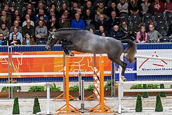 060, Cornet De Regor DM Z<br /> KWPN hengstenkeuring - 's Hertogenbosch 2020<br /> © Hippo Foto - Dirk Caremans<br /> 29/01/2020
