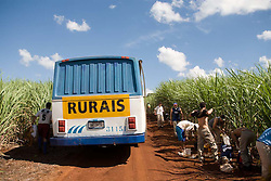 Trabalhadores rurais em plantacao de cana de acucar em Araraquara / Rural workers in the sugarcane plantation, in Araraquara, in Sao Paulo State. Brazil is the global leader in ethanol exports.