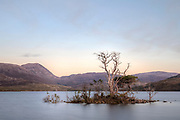 trees submerged at Loch Assynt, Sutherland, Scotland, United Kingdom