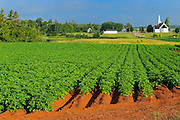 Potato field, red soil and church<br /> Kelby<br /> Prince Edward Island <br /> Canada