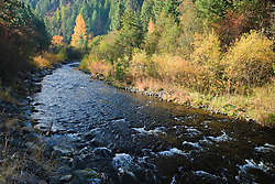 Tucannon River flows through autumn colored willow and cottonwood riverbanks in the Umatilla National Forest, Blue Mountains, Columbia County, Washington, USA