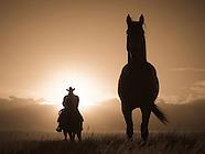 Cows & Cowboys