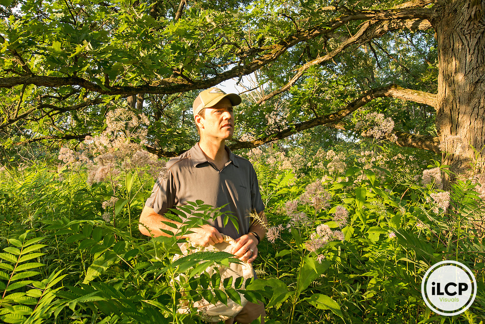 Xerces Society for Invertebrate Conservation biologist Rich Hatfield searches for rusty-patched bumble bees at the University of Wisconsin Arboretum. Rich is the driving force behind listing the rusty-patched bumble bee as an endangered species under the Endangered Species Act.