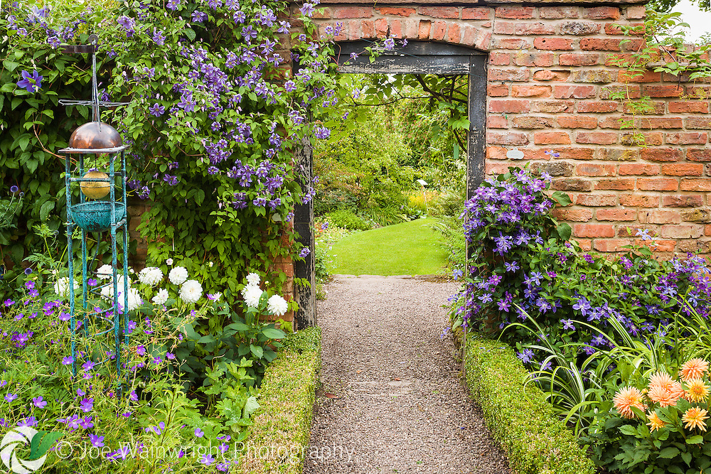 Clematis adorn a red brick wall at Wollerton Old Hall Gardens, Shropshire.  Photographed in July.