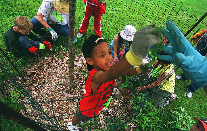 Travis McConnell, 5, of Iowa City, pulls weeds from around the base of a tree in Hickory Hill Park Thursday, May 20, 2004 in Iowa City. Shimek elementary school sent the kids to the park Thursday to pull weeds, plant new plants, and lay down wood chips to beautify the park.