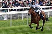 MAIN DESIRE ridden by jockey Daniel Tudhope and trained by Michael Bell winning The Listed British Stallion Studs EBF Westow Stakes over 5f (£50,000) at the York Dante Meeting at York Racecourse, York, United Kingdom on 17 May 2018. Picture by Mick Atkins.