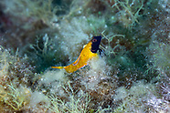 Méditerranée Underwater - France