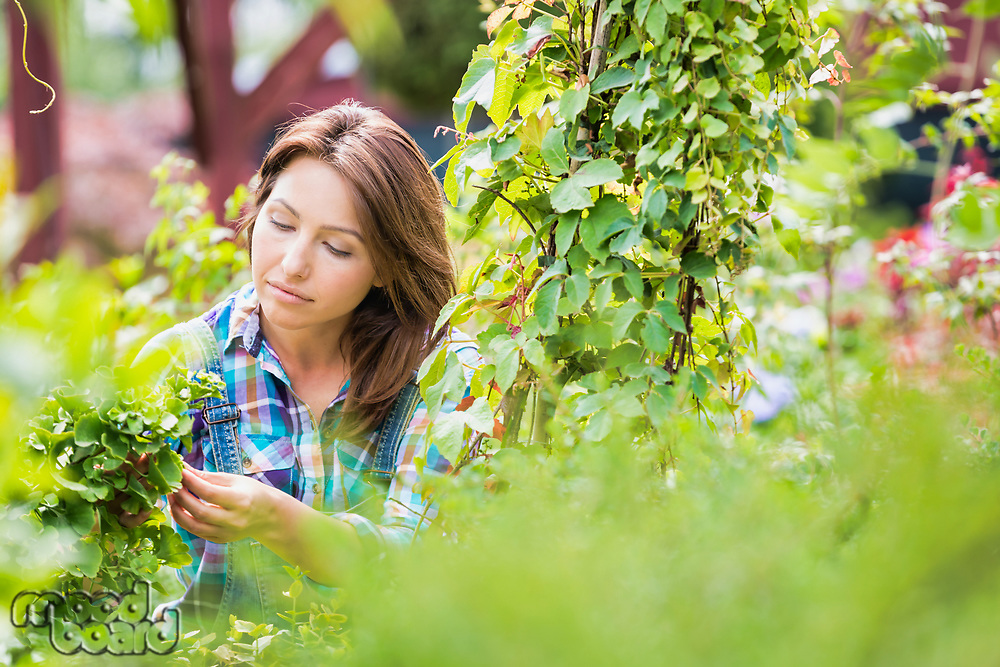 Portrait of smiling mature woman examining plants in the garden
