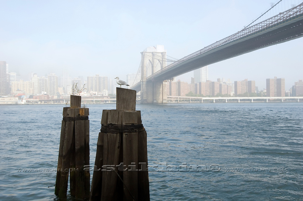 Seagull and East River