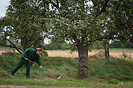 Apfelernte bei WIND UND WETTER: Vorsichtig<br /> harkt Gärtnermeisterin Silke Stölting die Früchte<br /> zusammen, solche mit Stellen sind nicht zu gebrauchen.