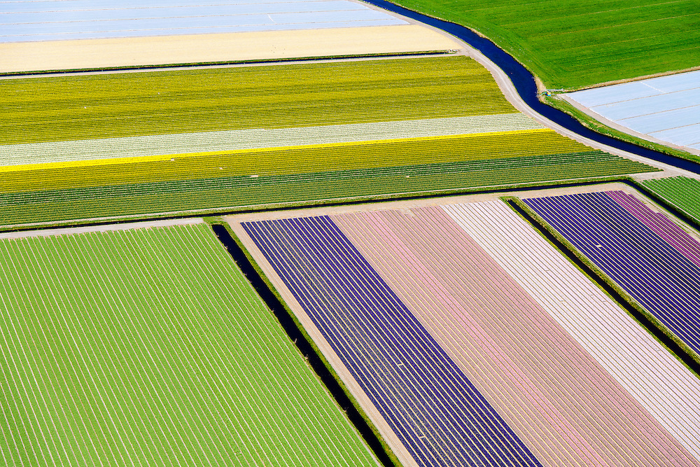 Nederland, Noord-Holland, Heiloo, 20-04-2015; begin van de bloei van bloembollenveld in het voorjaar, omgeving Heiloo.<br /> Beginning of flowering bulbs field in spring.<br /> luchtfoto (toeslag op standard tarieven);<br /> aerial photo (additional fee required);<br /> copyright foto/photo Siebe Swart