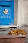 Cat sleeping in doorway, Sicily