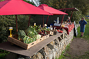 A fruit and veg stall beneath red umbrellas is on a dry stone wall on the Holy Island of Lindisfarne, on 27th September 2017, on Lindisfarne Island, Northumberland, England. The small Lindisfarne population of just over 160 is swelled by the influx of over 650,000 visitors from all over the world every year. A tidal Island: Lindisfarne is a tidal island in that access is by a paved causeway which is covered by the North Sea twice in every 24 hour period. The Holy Island of Lindisfarne, also known simply as Holy Island, is an island off the northeast coast of England. Holy Island has a recorded history from the 6th century AD; it was an important centre of Celtic and Anglo-saxon Christianity. After the Viking invasions and the Norman conquest of England, a priory was reestablished.