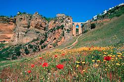 Europe, Spain, Andalusia, Ronda, wildflowers in field in Rio Guadalevin Gorge below city and historic Tajo Bridge,  and Tajo Bridge