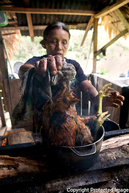 "Thelma Escalante, ""LA Patrona"" puts the chicken she has just killed in a pot of boiling water to make it easier to pluck its feathers."