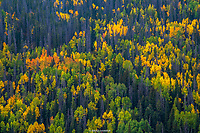 ROUTT COUNTY- STRAMBOAT SPRINGS, COLORADO FALL