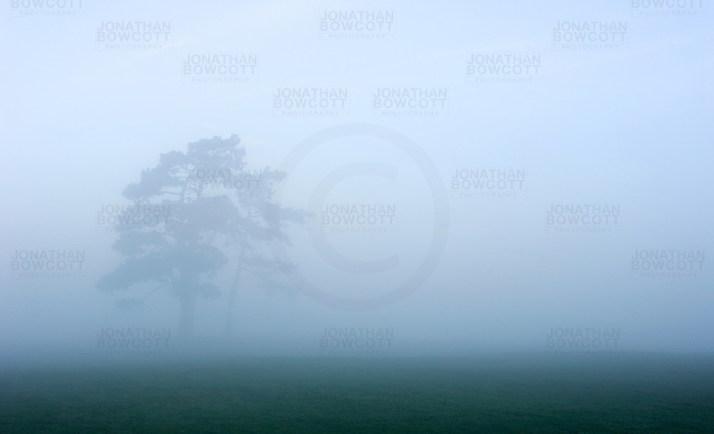 Iconic trees known as the Seven Sisters on Durdham Downs Bristol. Photographed during a particularly misty autumn in Bristol