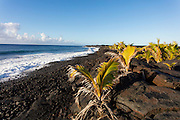 Kalapana, Kaimu Bay, new black sand beach, , The Big Island of Hawaii