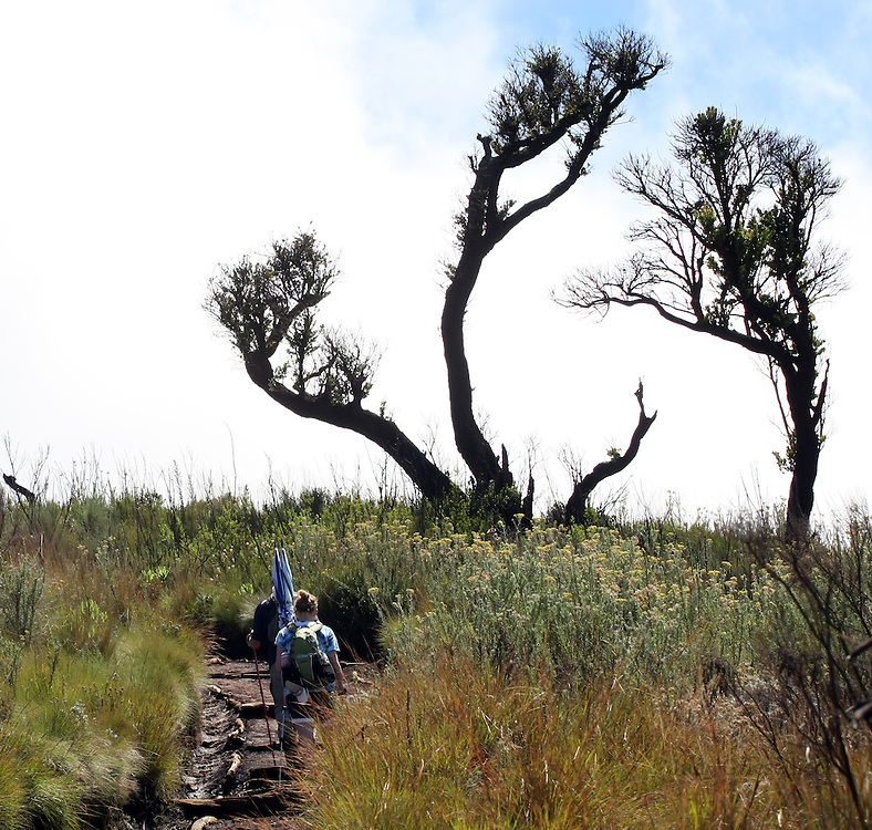 The trees and flowers grow moe sparse as the altitude increases on the climb up Mt. Kilimanjaro in Tanzania.
