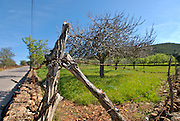 Beautiful fields of Ibiza, Spain