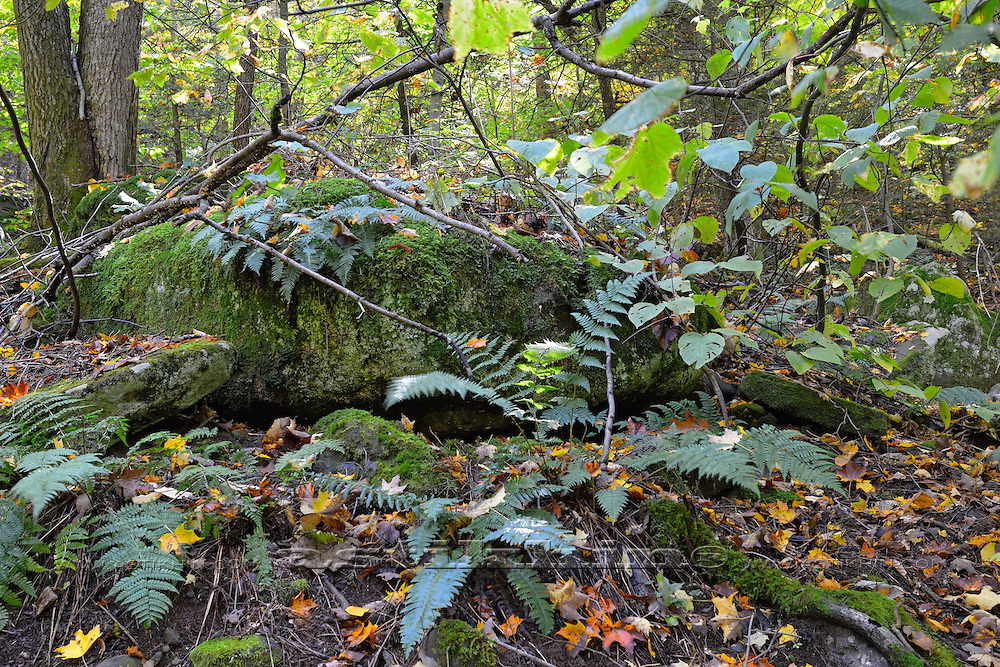 Moss covered forest and rocks