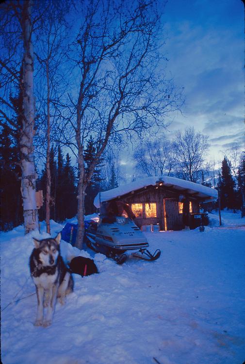 Alaska . Brooks Range . Crevice Creek . Winter cabin with guard dog / sled dog at gate.