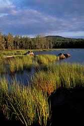 Umbagog Lake.  Reeds. Northern Forest. The Rapid River empties into Umbagog Lake.  Upton, ME