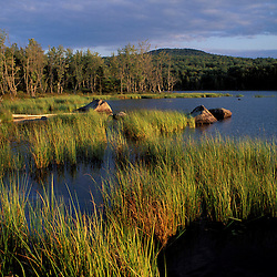 Umbagog Lake.  Reeds. Northern Forest. The Rapid River empties into Umbagog Lake.  Upton, ME