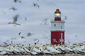 Algoa Bay & Bird Island