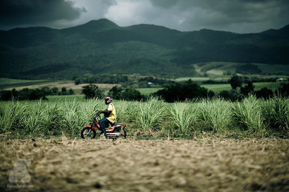 A man crosses a sugar cane field on a moped near Le Lamentin, Guadeloupe