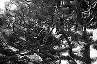Golden Gate Park, San Francisco, CA. Copyright 2007 Reid McNally.