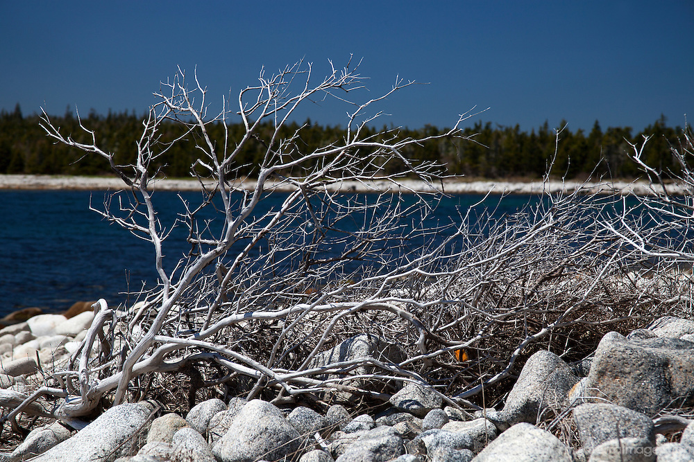 North America, Canada, Nova Scotia, Guysborough County. Driftwood on Rocks at Black Duck Cove Day Use Park.