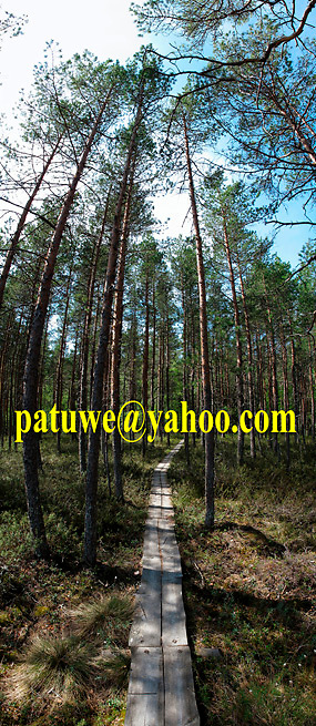 Scandinavia Finland Kurjenrahka national park forest and mire, nature reserve, bird sanctuary