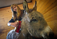 Rachel Scott, 14, brushes a burro's mane as she helps out during a class trip Thursday to the K2 Equestrian Center in Hayden.
