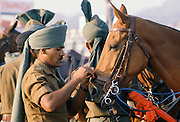 Indian army polo player with polo ponies at Jaipur Polo Club in New Delhi, India
