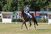 Dressuur Paarden '13