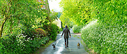 Woman out for a stroll with a pair of terrier dogs along a country lane on a rainy day at Swinbrook  in The Cotswolds, UK<br /> Model and property released