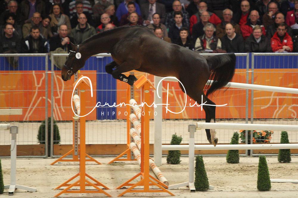 006 - Elion V<br /> KWPN Hengstenkeuring - 's Hertogenbosch 2012<br /> © Hippo Foto - Wendy Scholten