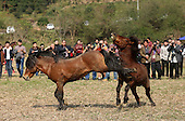 Shocking images of Horses fighting in China