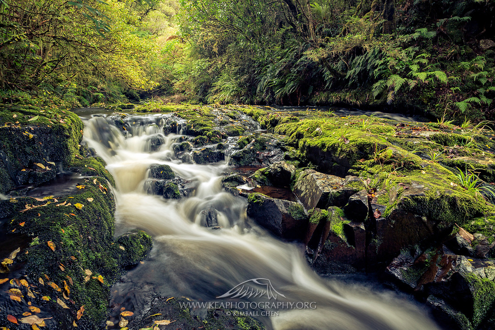 Autumn leaves downstream from the lower McLean Falls, along the Catlins Forest, New Zealand