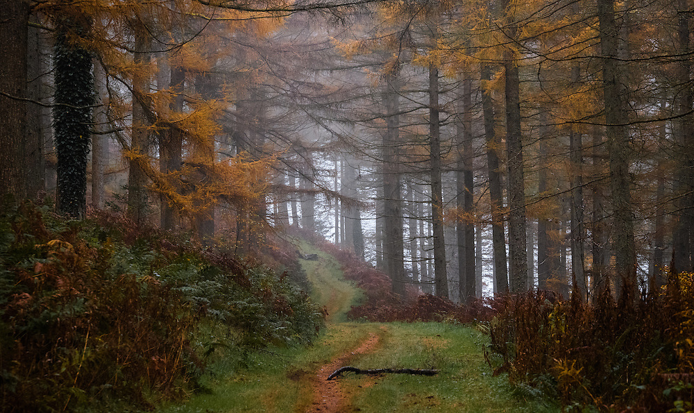 mist rising through green and yellow woodland