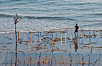 Man walking along the seaweed beds on the coast of Nusa Penida, Bali, Indonesia