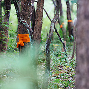 Priests tie ribbons on trees to save them from cutting near Chiang Mai, Thailand on our way to ride the Mae Wang Trail.