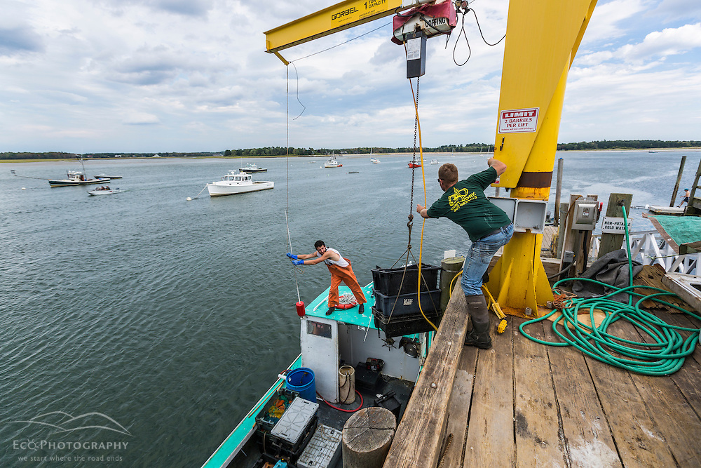 """Captain Travis Turner (green shirt) raises lobsters up from his boat """"Barbara Jean"""" at Pine Point in Scarborough, Maine. Sternman Alexander Thomas is on the boat."""