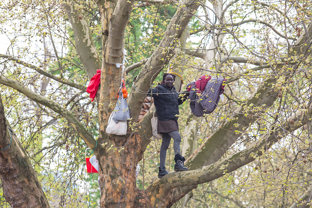 Germany - Deutschland - REFUGEES; ASYLUM politics; Flüchtlinge; NAPULI LANGA from Sudan, protesting & living on a tree (Platane) on Oranienplatz, Berlin-Kreuzberg; 12.04.2014; © Christian Jungeblodt