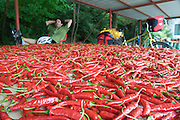 Chile Peppers, South Korea