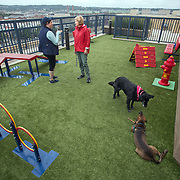WASHINGTON, DC - OCT07:  Charity Struthers (right)  chats with Candace Willis, who is visiting her daughter and granddog, while the dogs play at the dog park on the roof of the Park Chelsea Apartments, October 7, 2016, in Washington, DC. As new apartment buildings continue sprouting around downtown DC, developers know that a large percentage of renters in the city have dogs and make their choices of buildings based largely on pet-friendliness. So they go out of their way to be welcoming to dogs.  (Photo by Evelyn Hockstein/For The Washington Post)