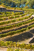 Vineyards of Quinta do Mourao port wine lodge and estate  along the River Douro north of Viseu in Portugal