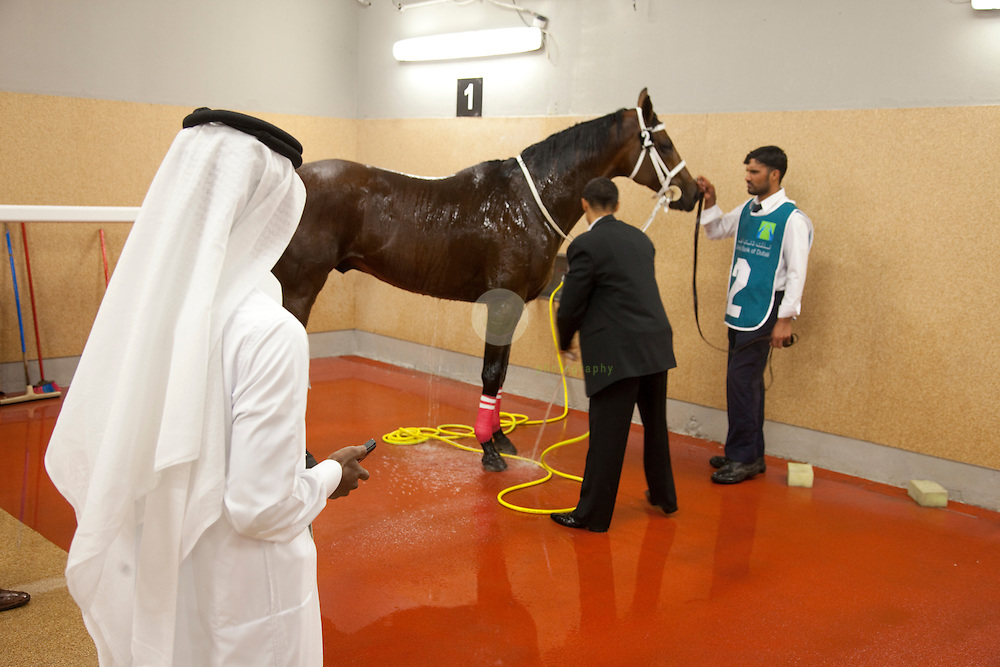 Dubai International Racing Carnival 2010: ASIA, UNITED ARAB EMIRATES, EMIRATE DUBAI, DUBAI 19.02.2010: A race horse is getting a well-earned shower after a race at Meydan, while his Arab owner is watching.